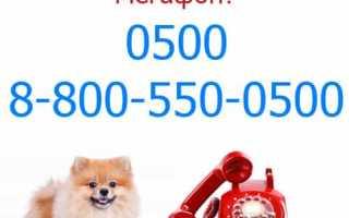 Какой номер у оператора мегафон бесплатный звонок